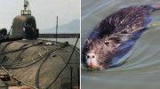 Откуда брались крысы на советских подлодках и как с ними боролись
