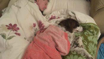 Чтобы старому псу не было одиноко, хозяева по очереди спят с ним на диванчике