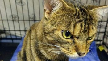 Пока у бездомного кота не появилась хозяйка, он пугал людей сердитой мордой