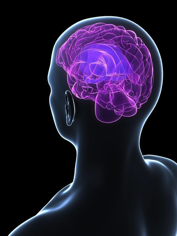 5 советов нейробиолога: Чем заменить таблетки для улучшения работы мозга