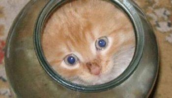 Что сделала мама кошка, когда ее малыш залез в банку и не смог выбраться