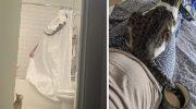20 примеров того, что кошка никогда не будет соблюдать «личное пространство»