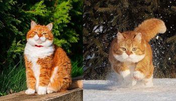 Уникальный случай, когда хозяин – фотограф-профи создает шедевры, снимая своего красавца кота