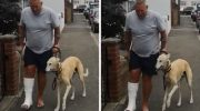 Потратив 400 долларов, хозяин узнал, что его пес хромает не из-за болезни
