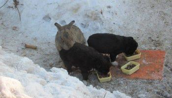 Заяц спас щенков, которые оказались в непростой ситуации