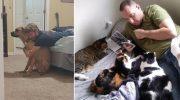 10 мужчин, которые изначально были категорически против животных в доме