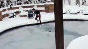 Чтобы спасти собаку, хозяйка бросилась в ледяную воду