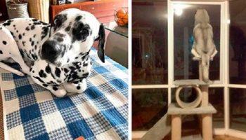 20 собак, которые думают и ведут себя как кошки