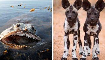 20 снимков различных животных, которые не перестают удивлять, одним лишь своим существованием