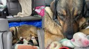 Чтобы собака родила в тепле, семья из Техаса провела в машине 12 часов